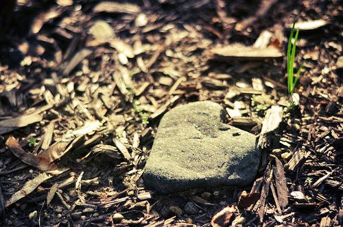 Bihotz eroria, hitz on batek altxatzen du. (FlickrCC, Loving Earth)